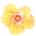 _s_alohadesign.png